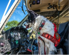 Moose isn't certified (yet) to fly a helicopter, but he sits  at the cockpit before he and Tootie lift off with  Miami-Dade Air Rescue