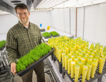 John Vogel with Brachypodium plants at the DOE JGI. (Roy Kaltschmidt, Berkeley Lab)